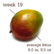 19 weeks-Mango