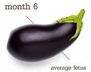 26 weeks - eggplant