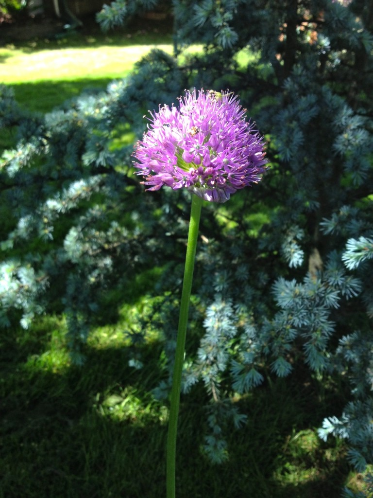 Stunning flower